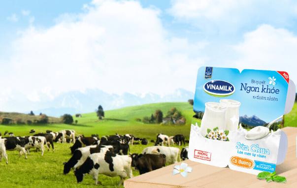 Calo trong 1 hộp sữa chua Vinamilk giải đáp chi tiết loại có đường, không đường