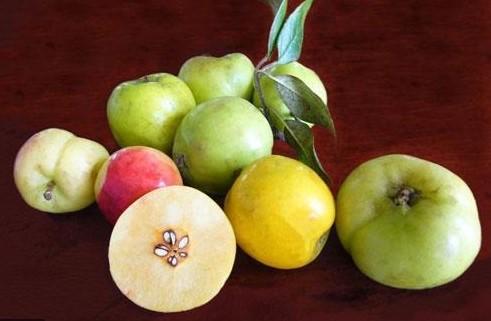 Ăn táo mèo có tốt không? ăn táo mèo có giảm cân không?